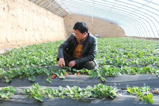 武威凉州区古城镇河北日光温室示范园区经济成效显著