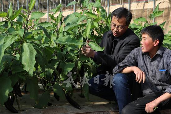 武威古浪县农户种植日光温室茄子销售良好(图)
