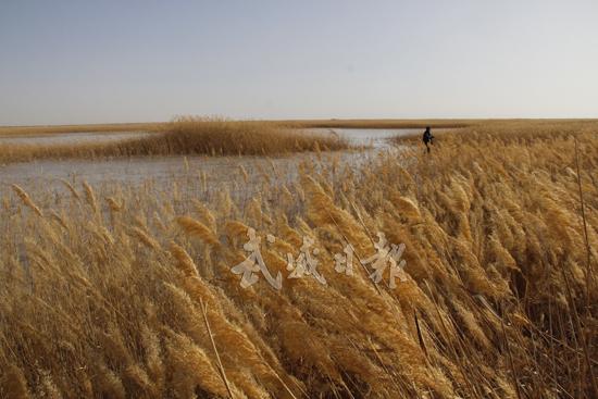 武威推进生态立市战略 建成防沙治沙核心示范区1000亩