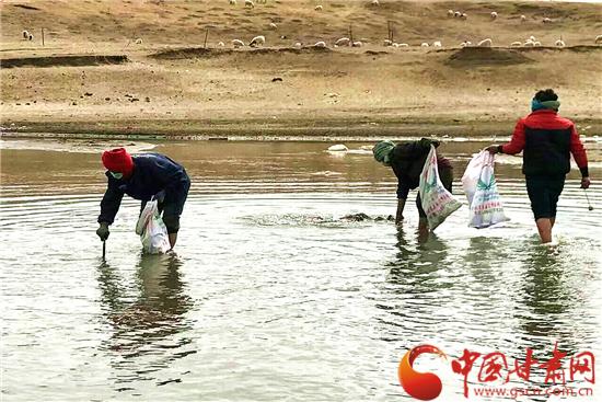 闻鸡起舞 甘南玛曲县干部群众撸起袖子加油干(组图)