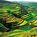 天津与甘肃、青岛与陇南分别签署东西部扶贫协作框架协议 携手打赢脱贫攻坚战