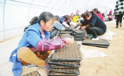 陇南徽县大力发展农业特色产业(图)
