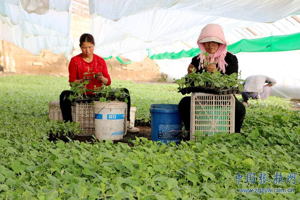 张掖临泽:蔬菜产业成促农增收的支柱产业(图)