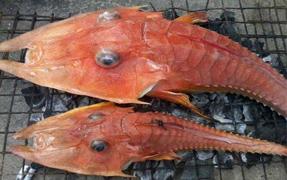 渔民捕到神秘海洋生物被吓呆