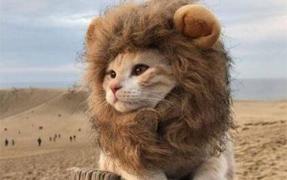 动物界的名媛实力演绎优雅