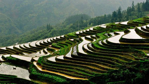 《今日聚焦-甘肃》 全国两会专题:让大地增绿 农民增收