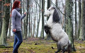 设得兰小马双腿站立跳舞似派对女王