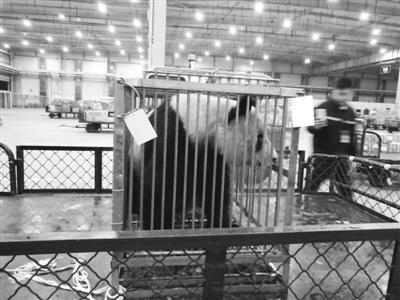 """祝福""""蜀兰""""古稀还乡好好颐养天年 兰州市动物园:短期内不会引入大熊猫"""