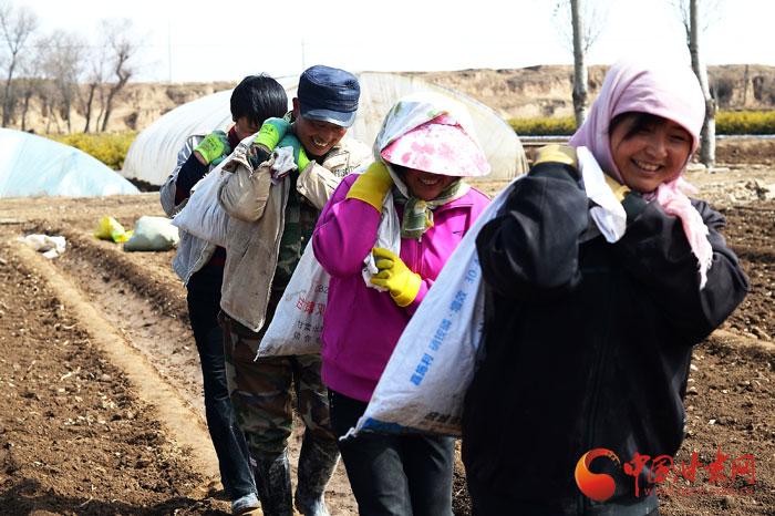 陇拍客丨春分定西菜农春耕忙(组图)