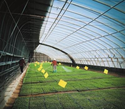 """兰州市政策性农险特色农业有了""""保护伞""""(图)"""
