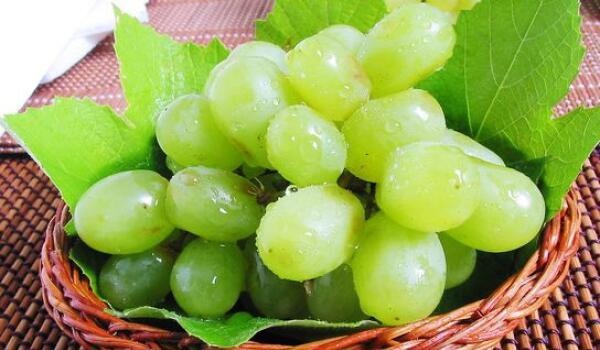 农产品地理标志产品——甘肃敦煌葡萄