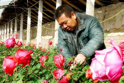 金昌新华村农民致富有了好门路