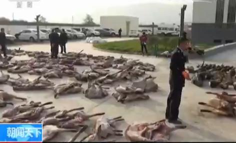 甘肃非法猎杀贩卖野生动物案告破 铺铁夹 设电网 盗猎手段多样