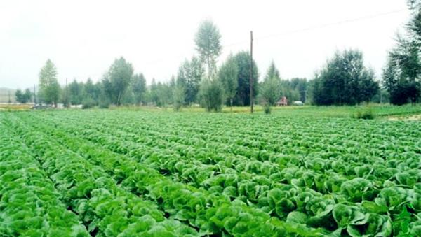 《今日聚焦-甘肃》  特色农业成为群众脱贫致富聚宝盆