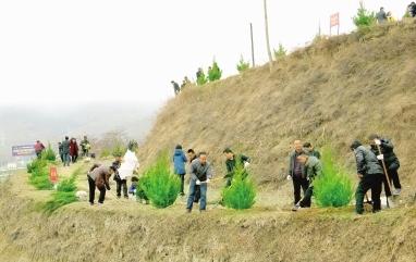 陇南西和县大力开展春季义务植树造林活动(图)