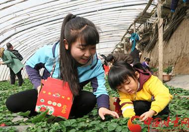 临夏永靖县草莓上市 采摘节助推旅游业发展(图)