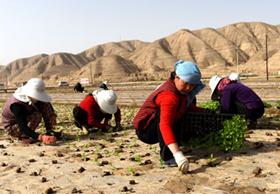兰州榆中县春耕生产有序开展(图)