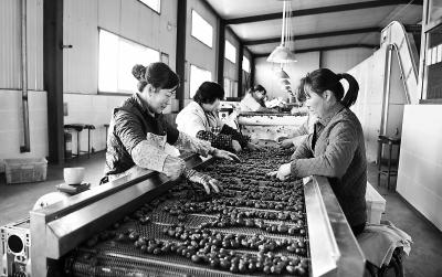 张掖临泽县有效促进农业增效农民增收(图)