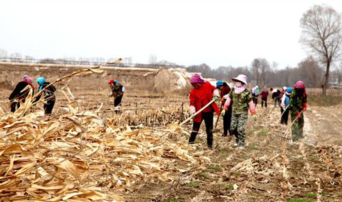 临夏州临夏县加快农业转型升级和农业现代化建设步伐(图)