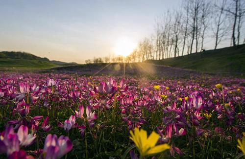 最美人间四月天 鄱阳湖畔花红草绿美不胜收