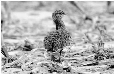 敦煌阳关自然保护区湿地保护措施得力 珍禽频现
