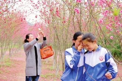 陇南两当县东山公园梅园内梅花怒放 吸引周边游客纷至沓来(图)