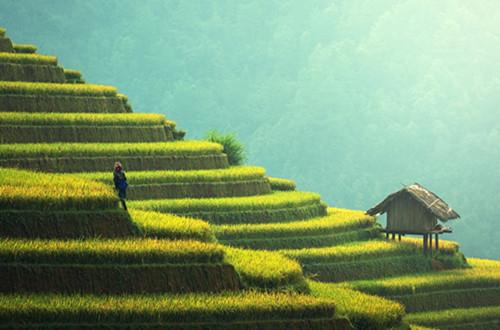 如何推进农业供给侧结构性改革?四个关键词告诉你!