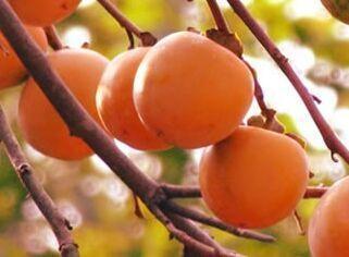 甘肃省陇南宕昌县特产甜柿