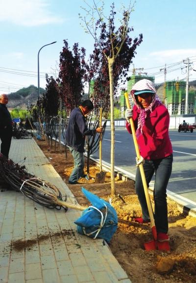 兰州安宁区绿化所人员劳动节里植树忙