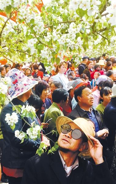 第二届高原梨花旅游节在临夏州和政县开幕