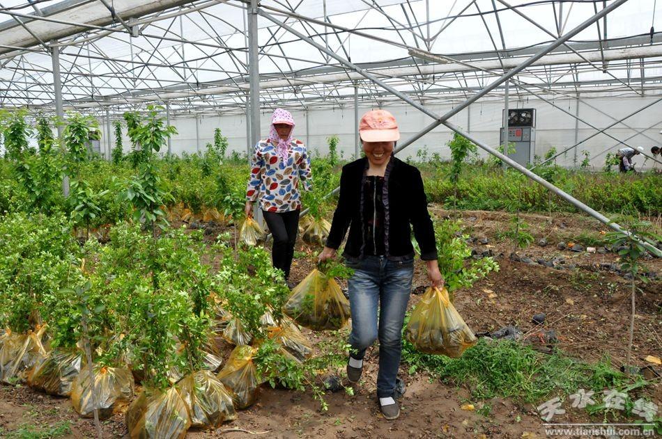【经济直通车】甘谷:科学建园助推现代农业(图)