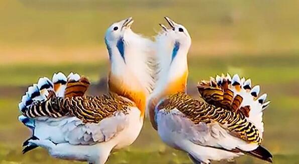 图牧吉国家级自然保护区:幽幽湿地 翩翩鸟翼