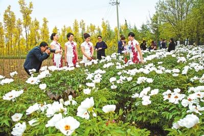 庆阳市昔家牡丹园旅游文化节5月5日开幕(图)