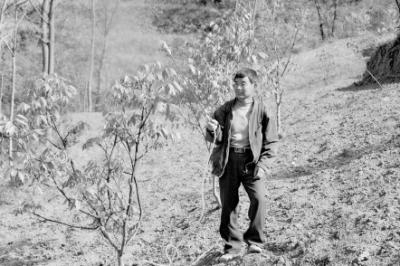 陇南康县发动群众对54万多亩核桃树进行灭虫等综合管理(图)