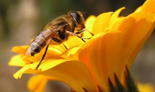 定西漳县打造小蜜蜂精准扶贫工程 农民致富再增新途径