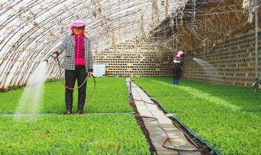 酒泉市肃州区发展非耕地设施农业见闻(图)