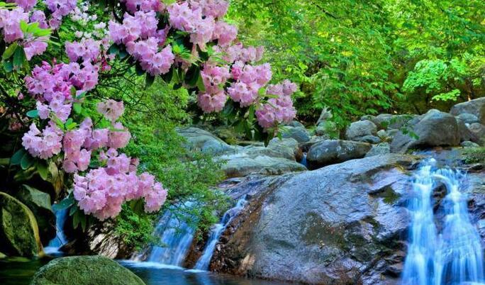 四川南江光雾山高山杜鹃花盛开美如画