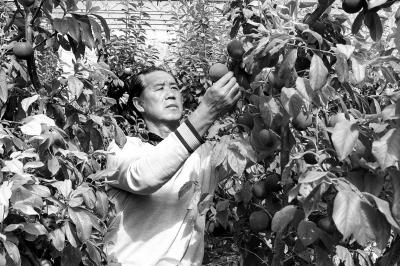 张掖临泽县引导农户发展特色林果产业(图)