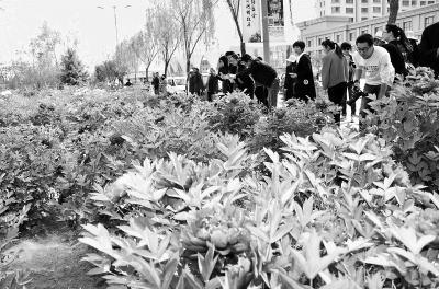 """【记者关注】""""赏花经济""""热陇原(图)"""