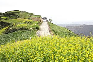 兰州:大金沟峡 潺潺流水野花香