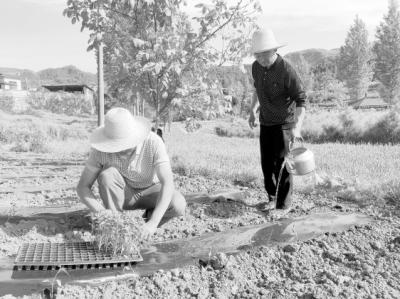 陇南徽县依托自然资源优势大力发展农业特色产业(图)
