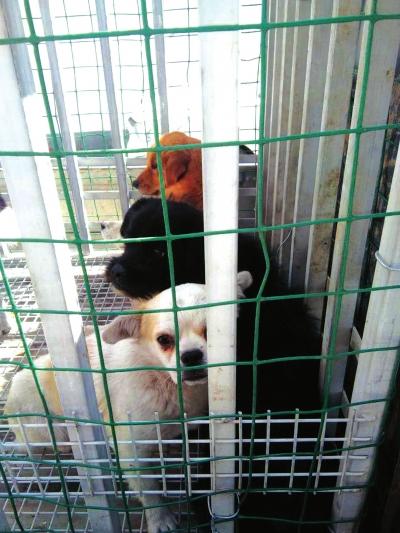 兰州高新区开展犬类管理联合整治行动 捕捉流浪狗送到指定地点