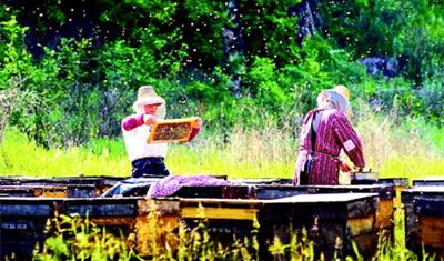 两名养蜂人在天水麦积区利桥镇散岔村公路边察看蜜蜂生长情况(图)