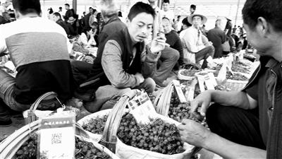 """天水秦州烟铺樱桃有了""""身份证"""" 果农手持二维码卖果果(图)"""