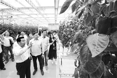 西北蔬菜产业发展论坛在天水武山开幕
