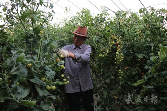 武威凉州区四坝镇建成千亩日光温室园区(图)