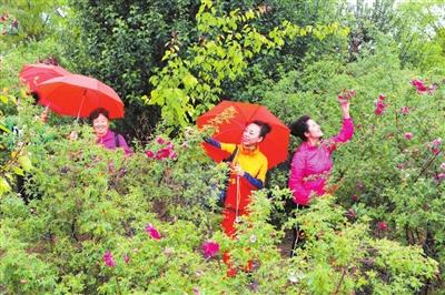 兰州新区中川玫瑰旅游节开幕(图)