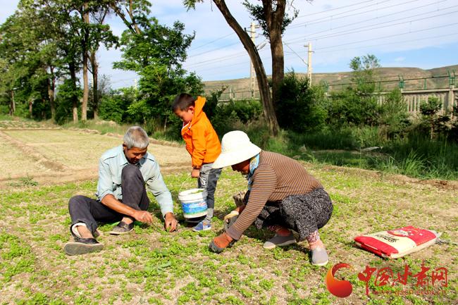 定西市安定区:发展蔬菜产业 促农增收(图)