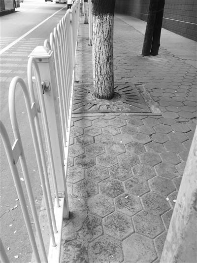 兰州市民反映:定西路嘉峪关路行道树飞虫侵扰行人