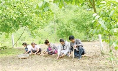 陇南康县中药材种植面积达8.68万亩 实现产值2.53亿元(图)